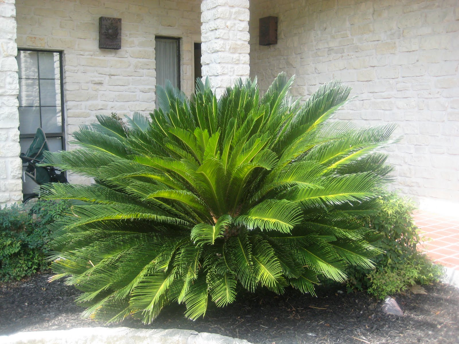 Tropical House Plants Poisonous To Cats