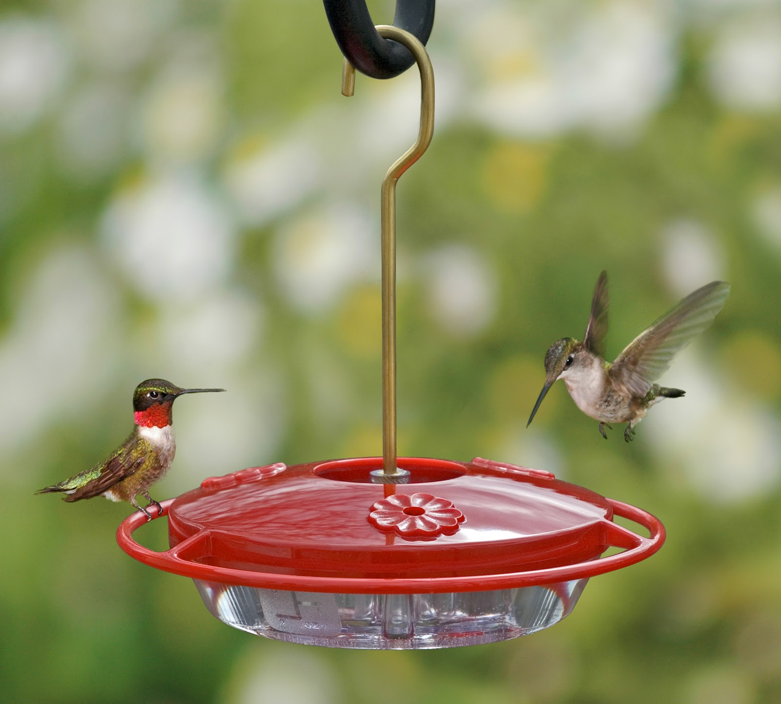Homemade Hummingbird Feeder Food Recipe