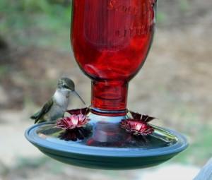 Nectar for Hummingbirds