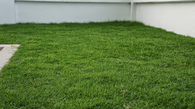 9 of the best low maintenance no mow grasses for your lawn for Best low maintenance grass