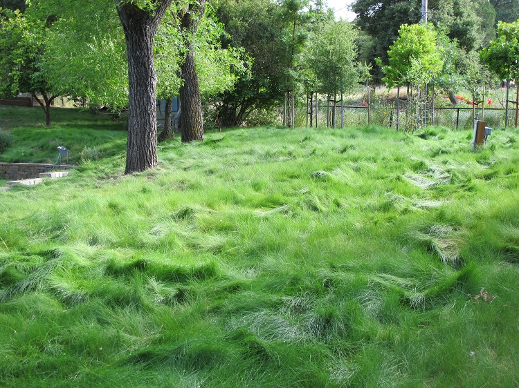 9 of the best low maintenance no mow grasses for your lawn for Best grass for landscaping