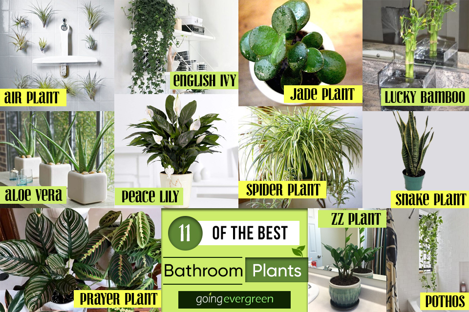 Decor Idea 11 Of The Best Plants For Your Bathroom