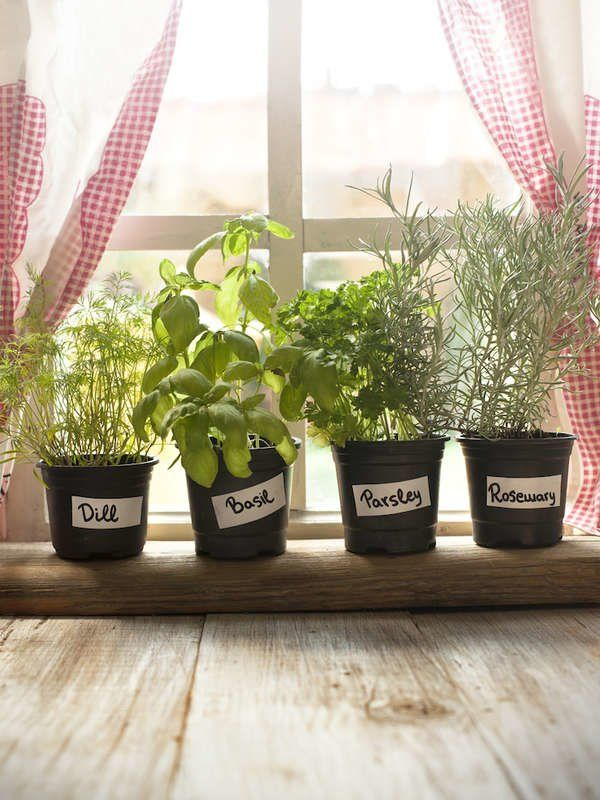 Herbs as Kitchen Plants