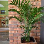 Cascade Indoor Palm