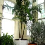 Indoor Parlor Palm